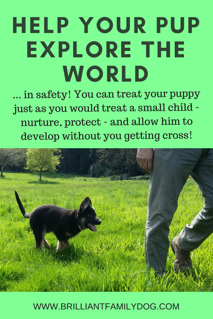 How can you rear your new puppy without losing your cool? Use the force-free tools available to help your dog cope with the world without ever going wrong! | FULL ONLINE COURSE FOR YOUR NEW PUPPY!  | #newpuppy, #housetraining, #puppytraining, #dogbehavior | www.brilliantfamilydog.com