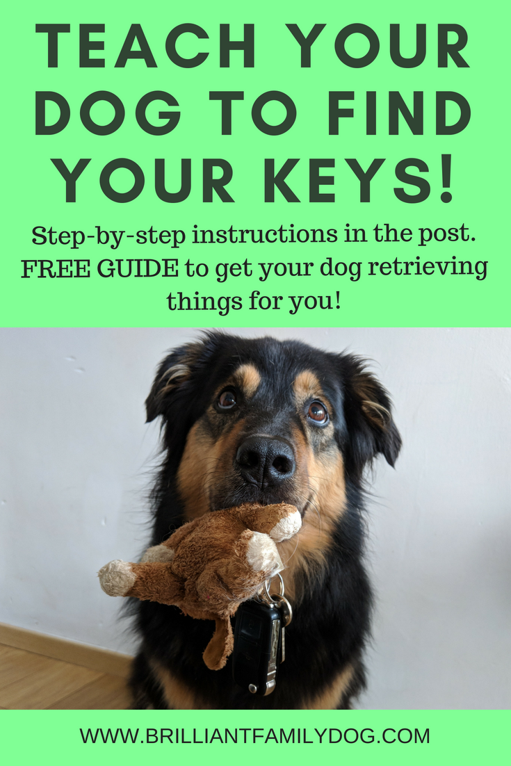 Teach your dog to retrieve, fetch, and bring back - your keys! your phone! your purse! Step-by-step instructions to an enthusiastic retrieve | FREE GUIDE | #retrievetraining, #dogtraining, #searchdog, #puppytraining, #dogbehavior | www.brilliantfamilydog.com