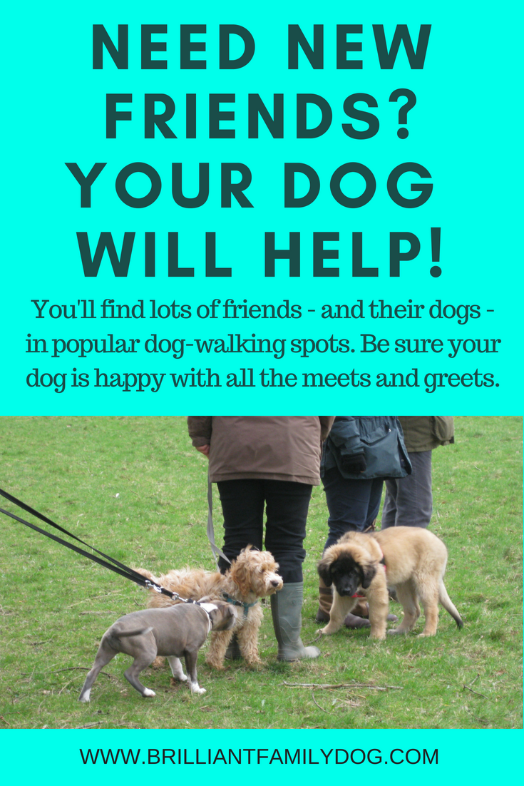 It's just you and your dog now … how can you make new friends? 12 ideas here to meet other doggy people in your new life | FREE ECOURSE | #newpuppy, #dogtraining, #newrescuedog, #puppytraining, #dogbehavior, #dogfriends | www.brilliantfamilydog.com