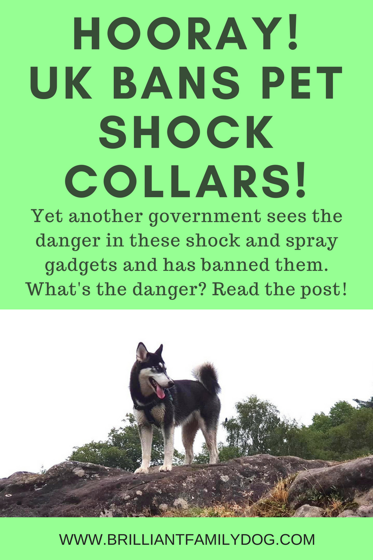 More and more civilised countries round the world are banning shock collars - e-collars, electronic training collars, electronic spray collars| These gadgets are not only cruel but also harmful and can give you the exact opposite from what you wanted. | FREE ECOURSE | #shockcollar, #electronicdogcollar, #dogtraining, #electronicspraycollars, #puppytraining, #dogbehavior, #dogsandcats | www.brilliantfamilydog.com