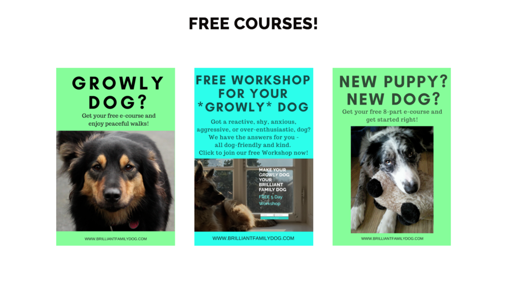 The easy way to train your dog! Step-by-step free courses to teach you how to teach your dog. | FREE COURSES from Brilliant Family Dog! | #newpuppy, #dogtraining, #newrescuedog, #puppytraining, #doghealth, #dogbehavior, | www.brilliantfamilydog.com