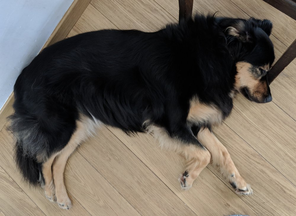 How well do you feel after a good night's sleep? Your dog needs much more than you do to feel as good! Check out this post to find out more. | FREE BOOK! | #newpuppy, #dogtraining, #puppynipping, #newrescuedog, #doghealth, #dogbehavior, #dogsleep, #overexciteddog | www.brilliantfamilydog.com