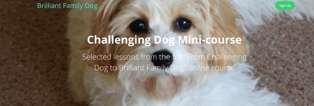 Challenging Dog mini-course | www.brilliantfamilydog.com