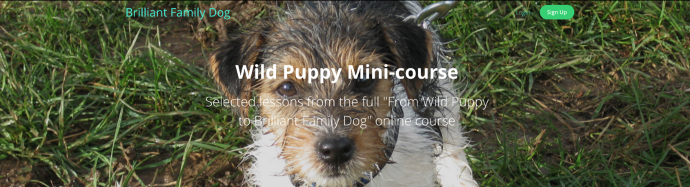 Wild Puppy mini-course | www.brilliantfammilydog.com