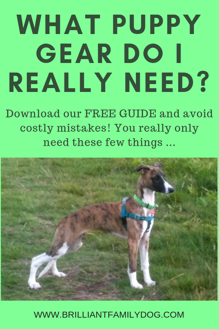 Bringing home your new puppy? Here are the things you'll find invaluable - and also what you need to avoid - to rear your puppy successfully | FREE PUPPY GUIDE | #newpuppy, #dogtraining, #puppytraining, #puppycollar, #puppybed | www.brilliantfamilydog.com