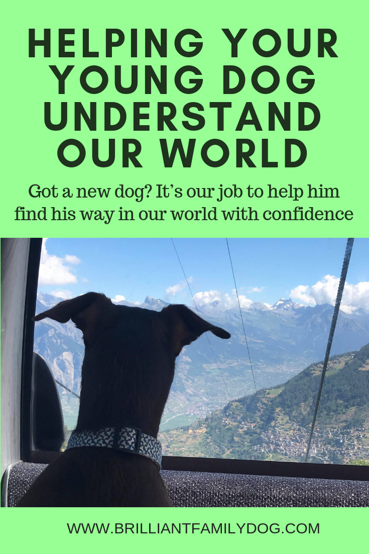 How do you get your new dog to explore the world with confidence? | FREE ECOURSE | #newpuppy, #dogtraining, #newrescuedog, #dogbehavior, #dogimpulsecontrol | www.brilliantfamilydog.com