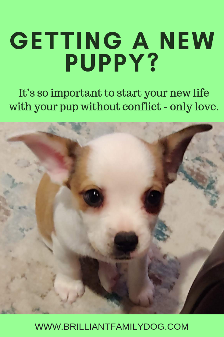 Description: Got a new puppy! Wonderful! Now find out how to make your pup the best ever with this post. Lots of resources to get you started fast | FREE GUIDE | #newpuppy, #dogtraining, #puppyandolderdog, #puppytraining, #puppycare, #dogbehavior | www.brilliantfamilydog.com