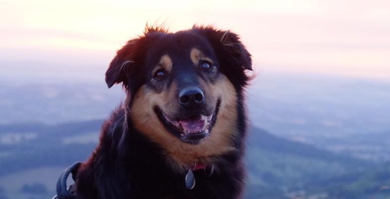 Growly Dog Free Workshop | www.brilliantfamilydog.com