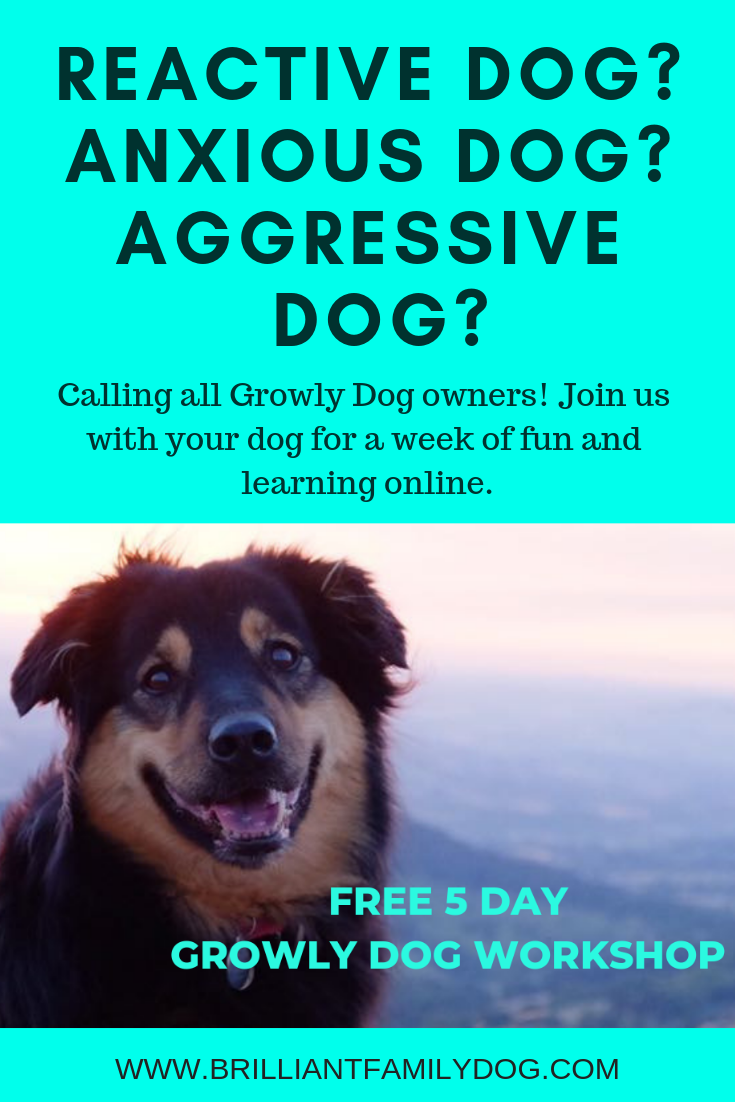 Join our FREE 5 Day Live Workshop and change walks with your reactive dog - all force-free and dog-friendly! | CLICK TO SIGN UP | #aggressivedog, #reactivedog, #dogtraining, #dogbehavior, #growlydog | www.brilliantfamilydog.com