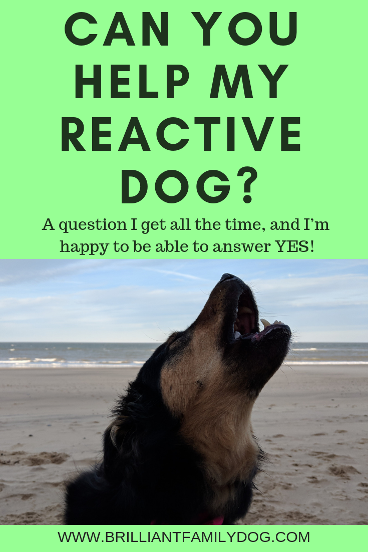 Yes, there is a way to change your reactive dog and enjoy walks again - all force-free and dog-friendly | FREE 5 DAY ONLINE WORKSHOP |  #aggressivedog, #reactivedog, #dogtraining, #growlydog | www.brilliantfamilydog.com
