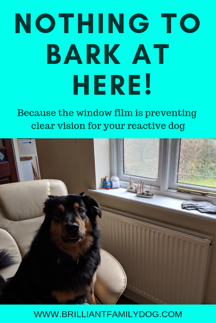 How to stop your dog barking all day at the window - all force-free and dog-friendly! | FREE WORKSHOP | #aggressivedog, #reactivedog, #dogtraining, #growlydog, #dogbarking | www.brilliantfamilydog.com