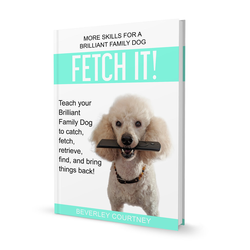 Teach your dog to retrieve, fetch, catch, and bring things back | FREE EMAIL COURSE | #newpuppy, #dogtraining, #newrescuedog, #puppytraining, #dogbehavior #dogretrievetraining | www.brilliantfamilydog.com