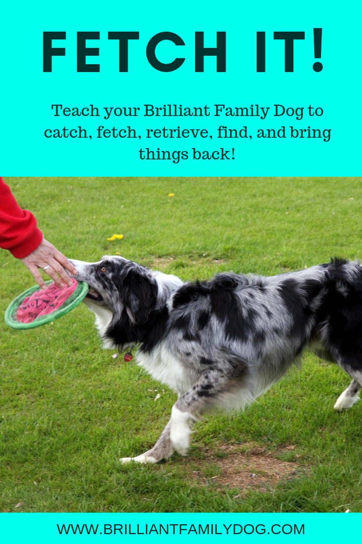 Teach your dog to retrieve, fetch, catch, and bring things back | FREE EMAIL COURSE | #newpuppy, #dogtraining, #newrescuedog, #puppytraining, #dogbehavior #dogretrievetraining | www.brilliantfamilydog.com