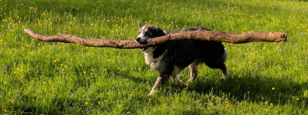 6 Rollo big stick closer.png