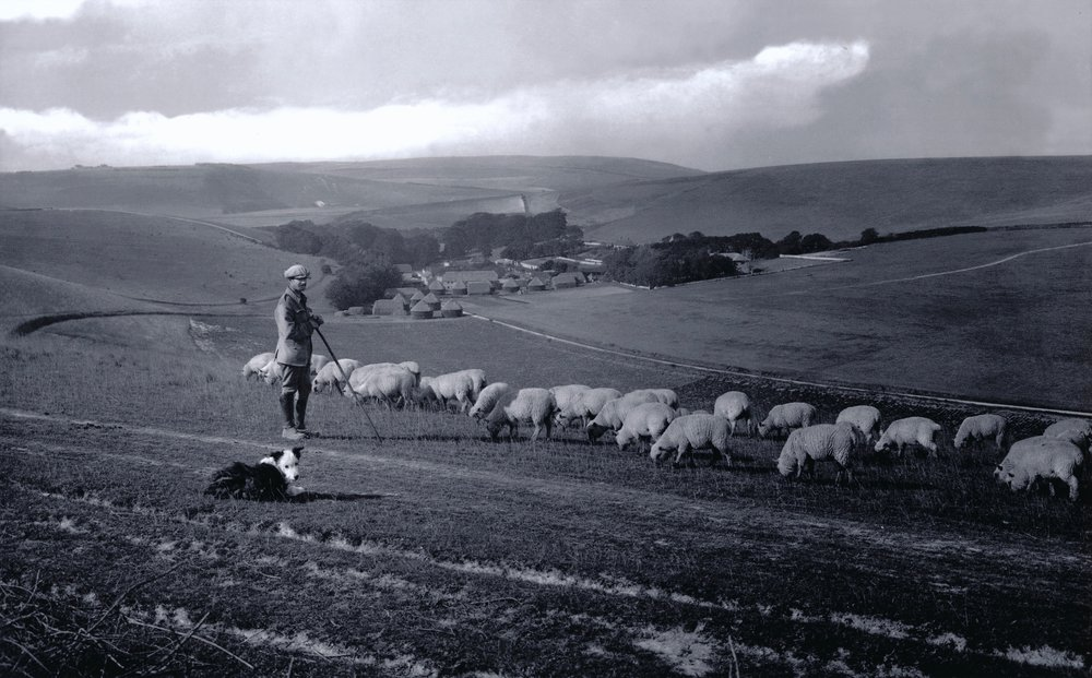 Westdean 1922. Shepherd with his flock. – Version 2.jpg