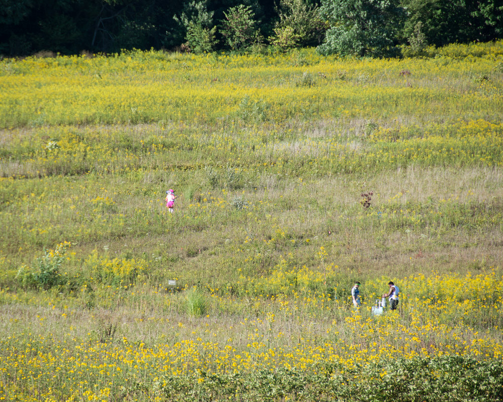 188527_Lost in the Meadow_Coletti_ Heather _Longwood Volunteer Photographer_.jpg
