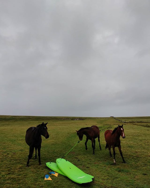QUIT your horsing around & book yourself a surf lesson with us today!  It's neigh-ver too late so saddle up & enjoy the ride. * * 🌊