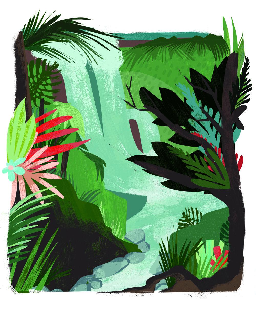 4rainforest.jpg