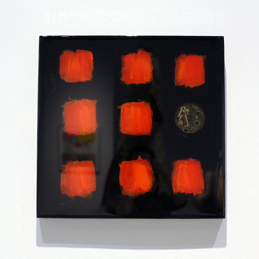Simone Welsh, Donte, 2018, Acrylic paint on wood panel, with bacteria grown on Trypticase Soy Agar