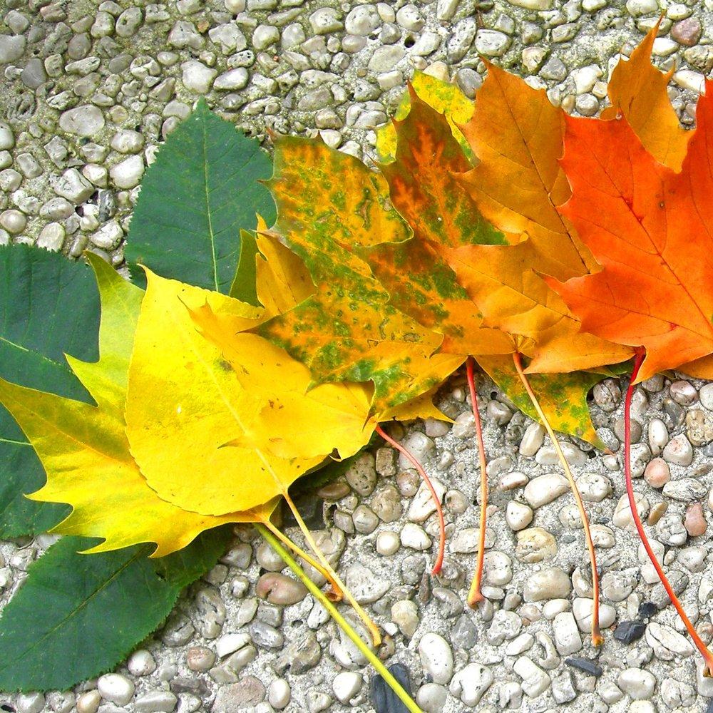 rainbow_of_autumn_by_lani_heartcore.jpg
