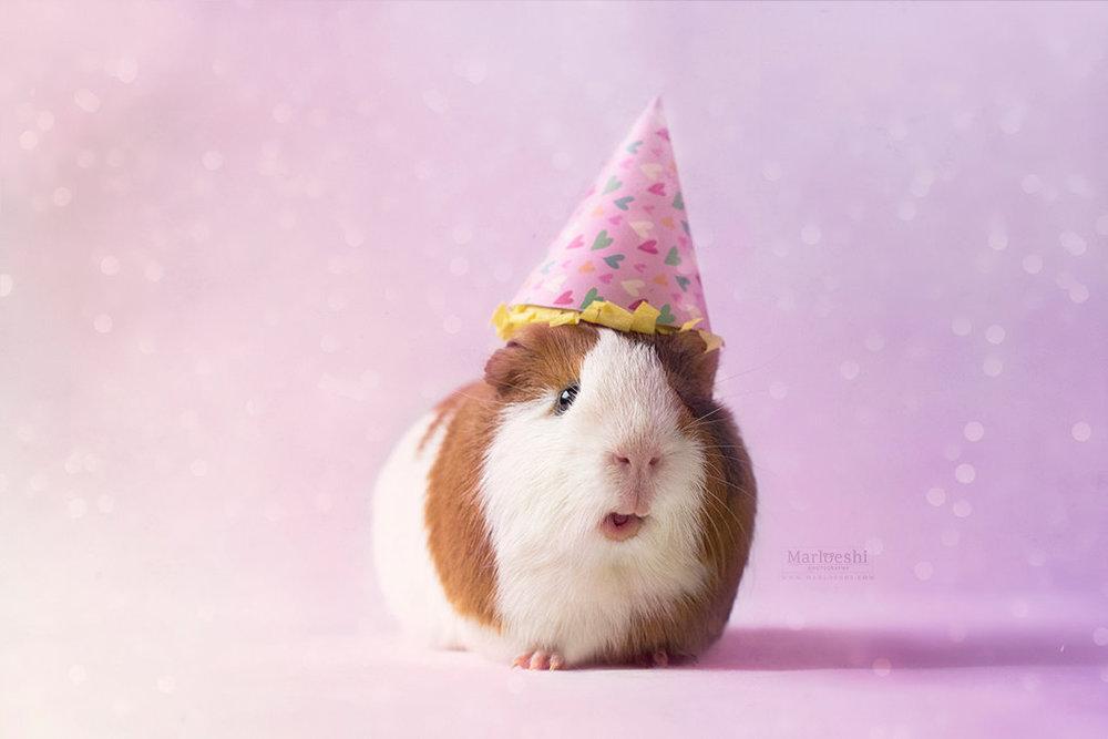 party_piggy__by_marloeshi-dao4kqq.jpg