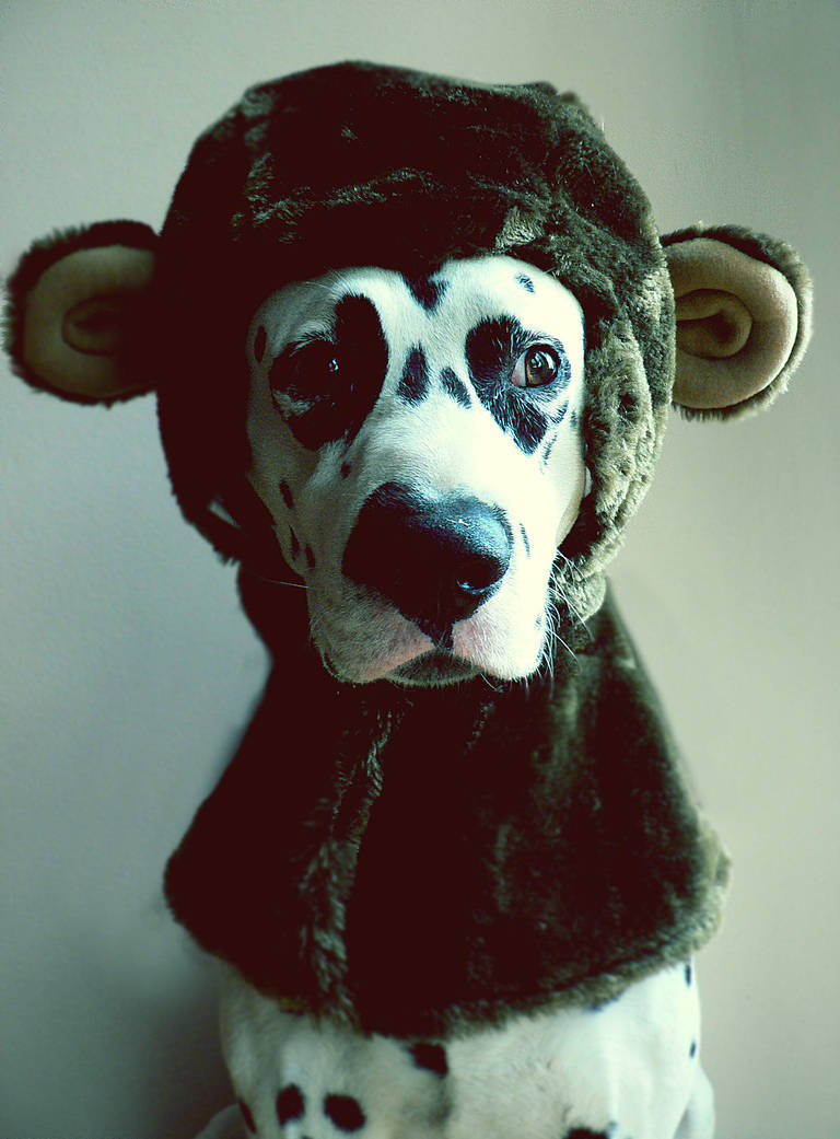 confuseddog.jpg