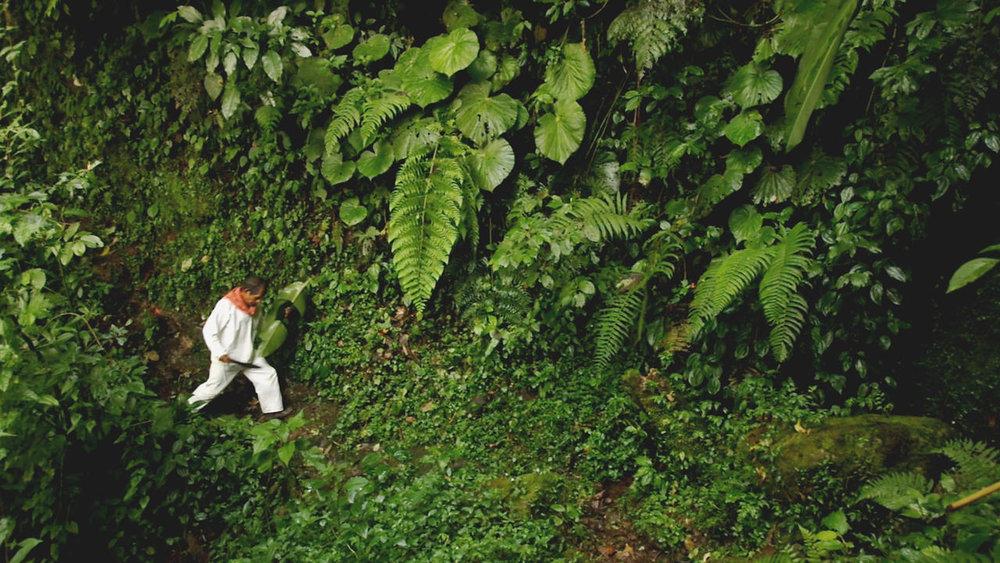 The Modern Jungle.jpg