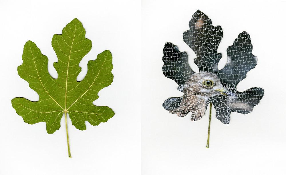 two_sided_leaf.jpg