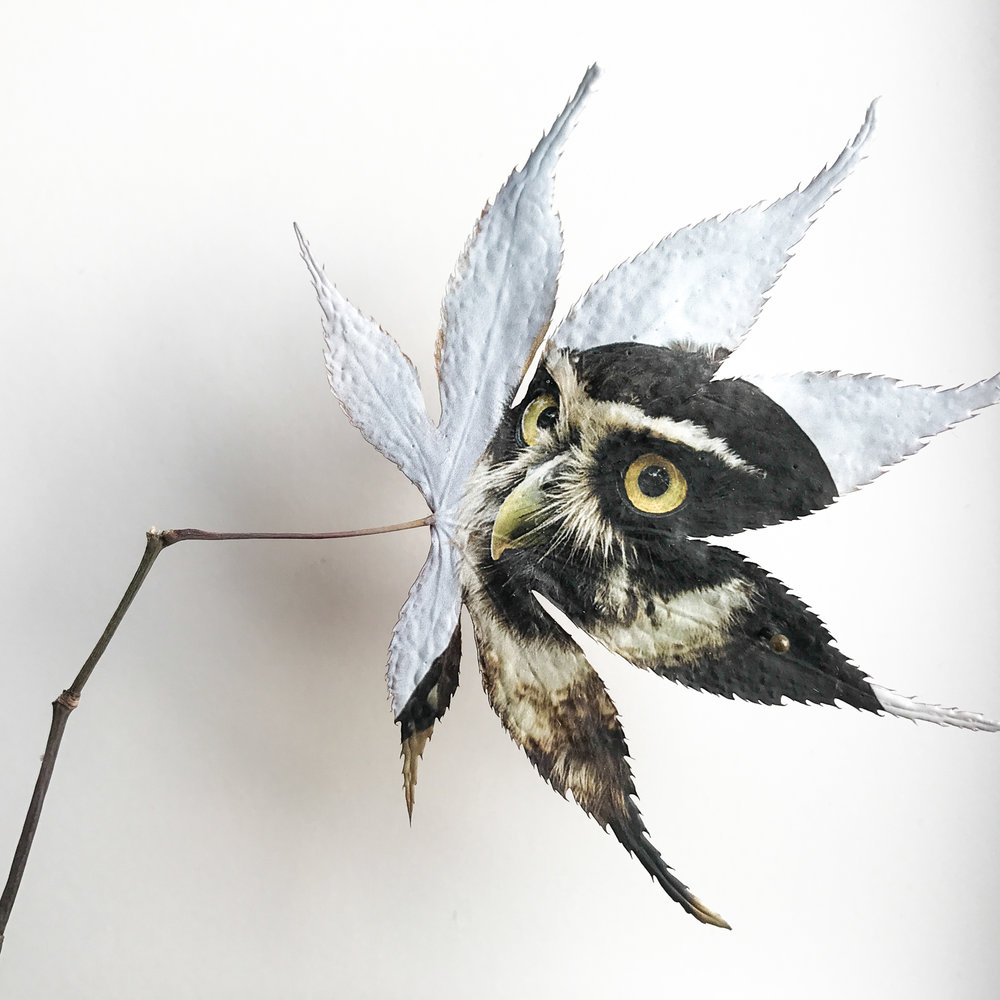 eagle_leaf.jpg
