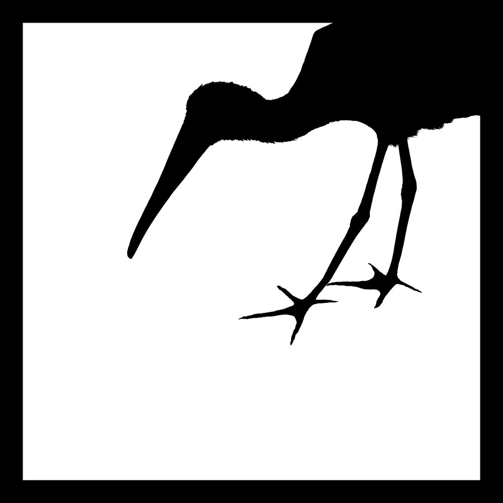 ibis_2.jpg