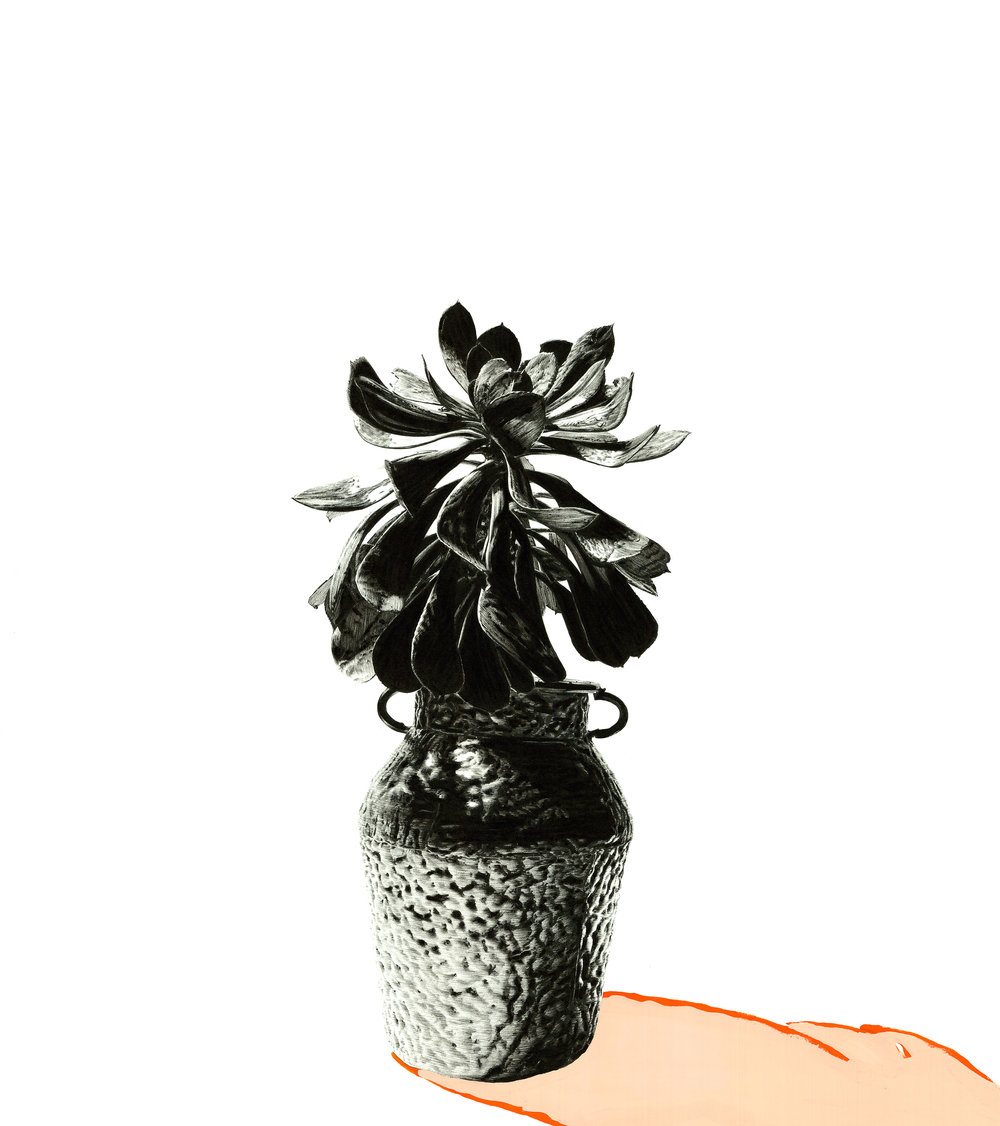 Matt Coyle,  Pot Plant , 2015, felt-tip pen, gouache on paper, 59 x 52cm