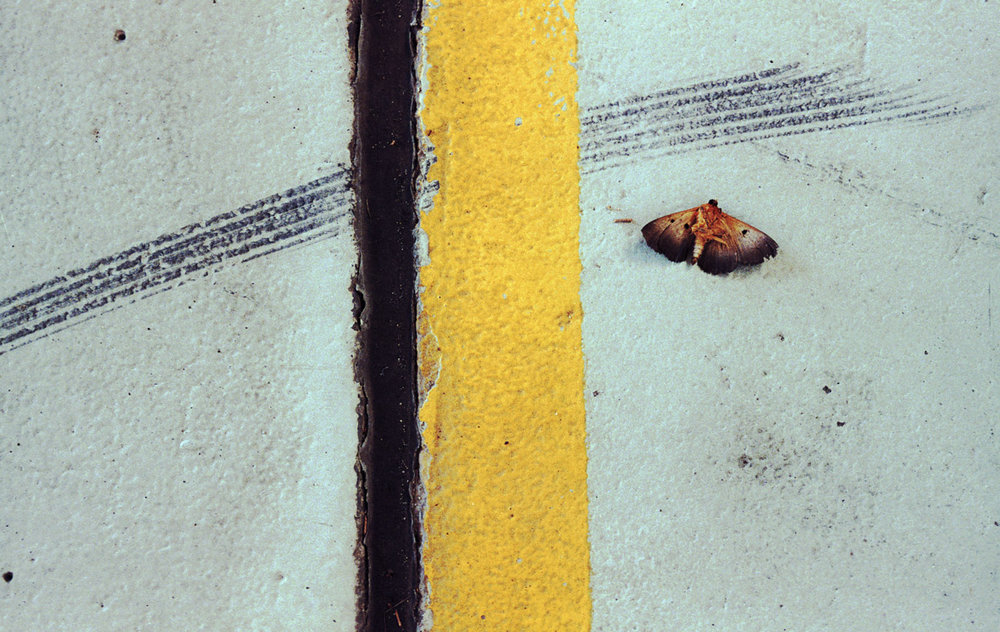 Jesse Marlow,  Moth and the Line,  2010, pigment print, edition of 10