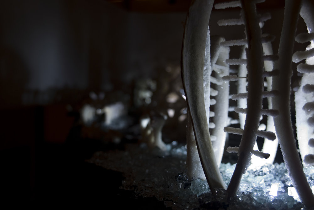 Cyrus Tang,  The Fleeting Now and Eternity , 2011, animal bones and Borax, dimensions variable, installation view