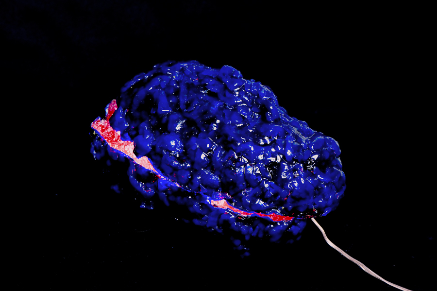 Elisabeth Weissensteiner,  Blue Brain-Shell,  2012, polyester resin, fibreglass, pigments, LED light, 25 x 15 x 15cm