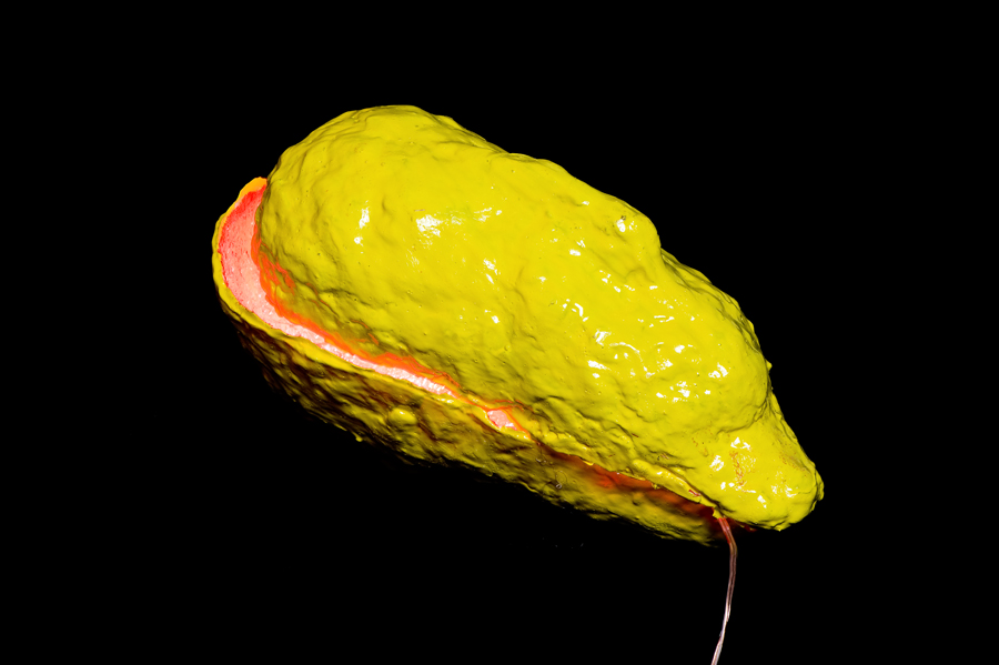 Elisabeth Weissensteiner,  Yellow Brain-Shell , 2012, polyester resin, fibreglass, pigments, LED light, 55 x 15 x 15cm