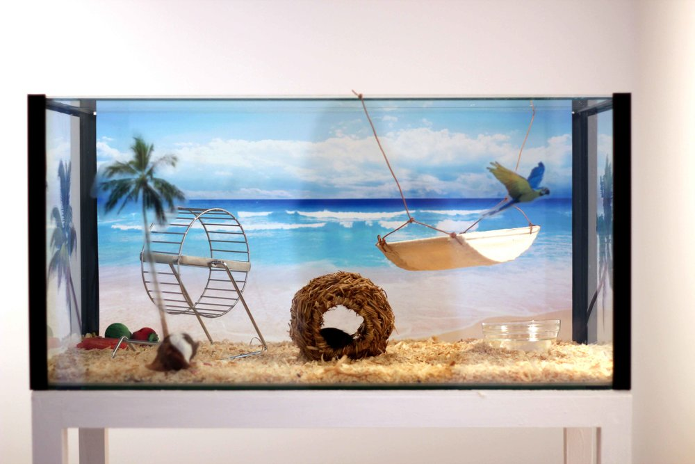 Bonnie Lane,  The People's Paradise , 2011, fish tank, vinyl prints, wood, mice, 30 x 61 x 31cm