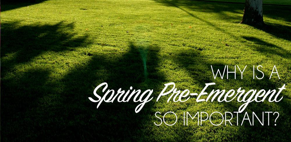 Spring Pre-Emergent.jpg