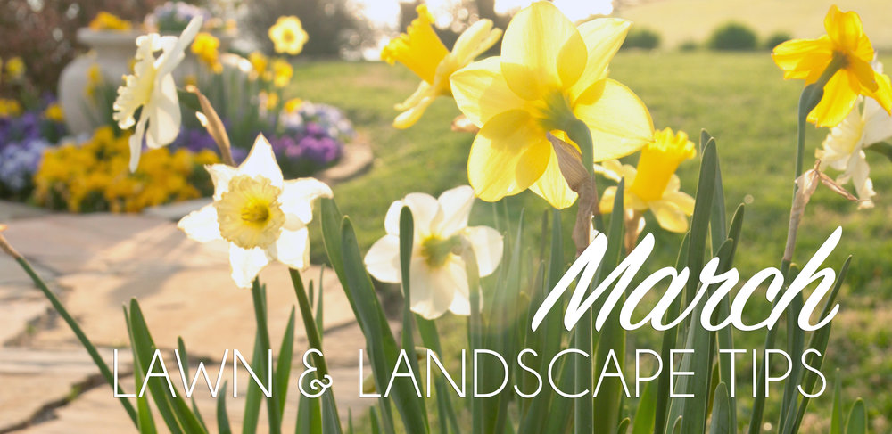 March Lawn & Landscape Header.jpg