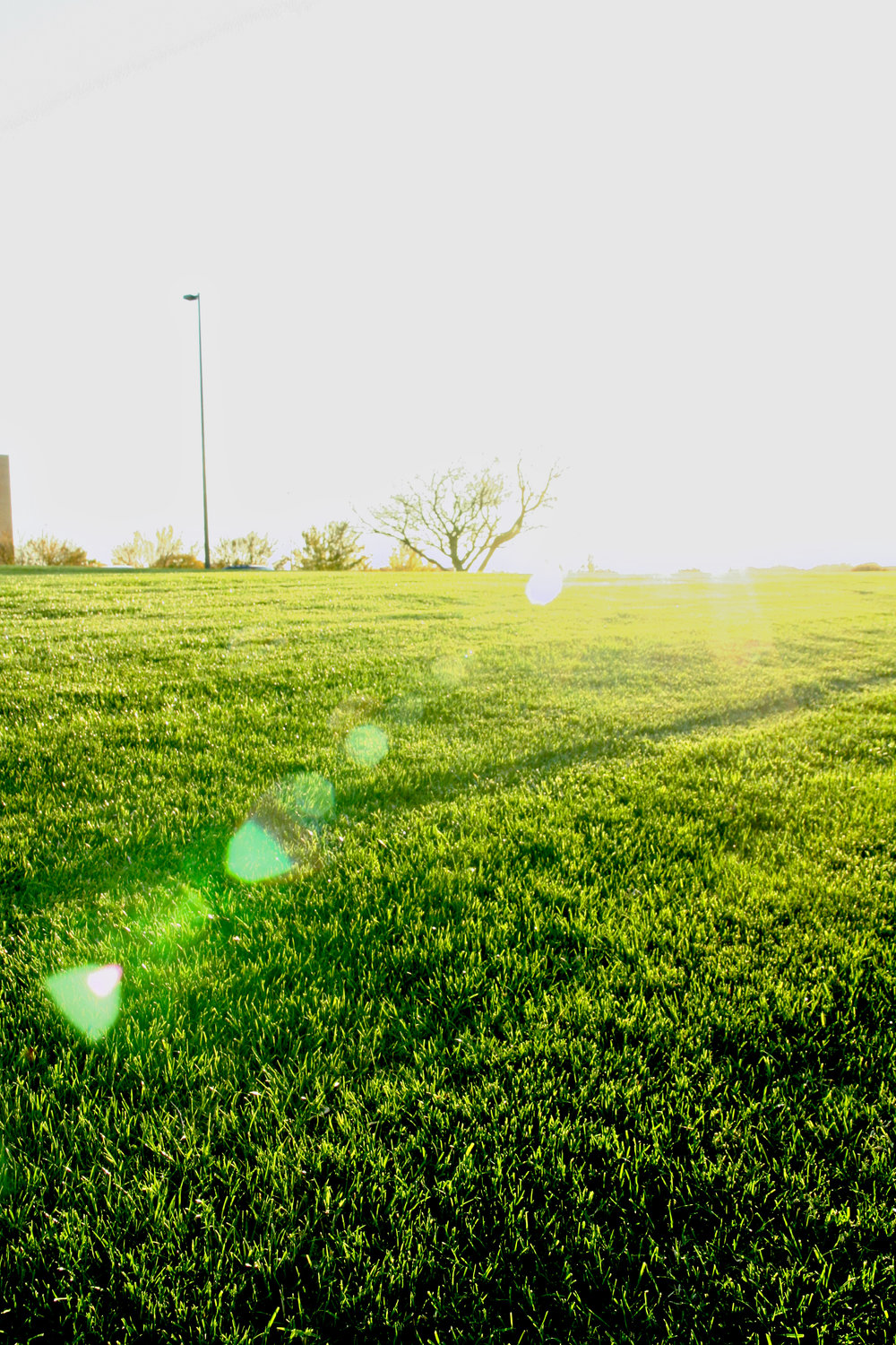 The Best News About Crabgrass - If you are a subscriber to a Hall   Stewart Lawn Care Program, either the 7-Step Weed Control & Fertilizer or the 4-Step Weed Control Only, you have already had your 1st Pre-emergent Application to prevent crabgrass this year!