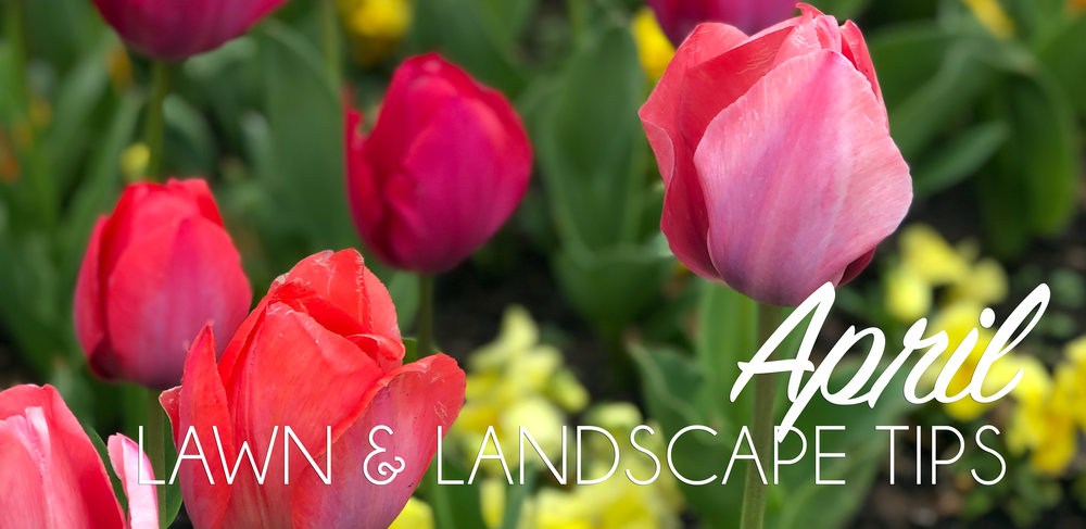 April Lawn & Landscape Header.jpg