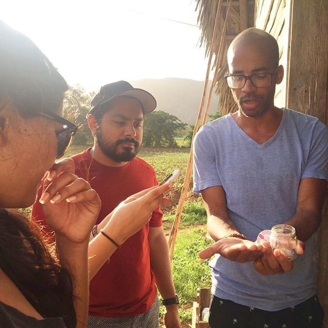 Caravan leader Yos, showing Caravanners how Tobacco is grown at a Tobacco Farm in Vinyales, Cuba 🌱 Our Caravanners were pretty intrigued by this process (notice Raj's face) 😂😜