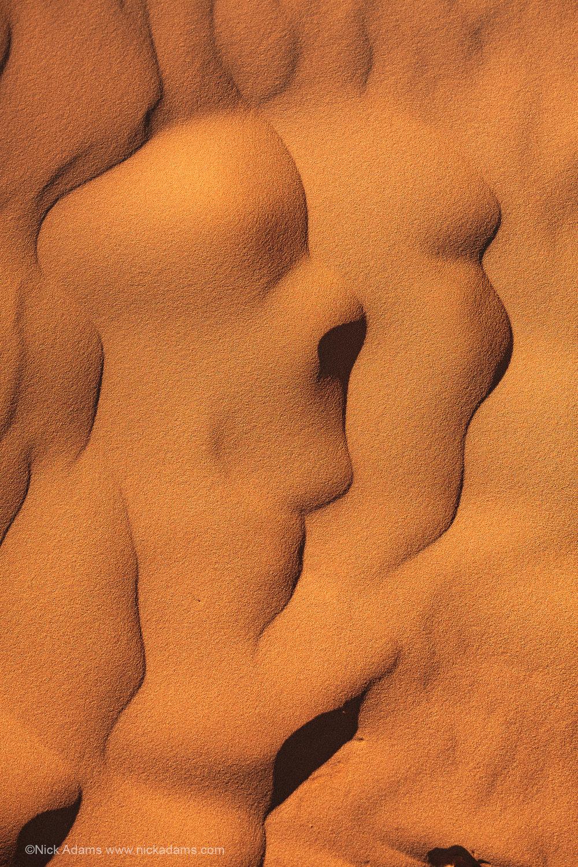 Detail at Coral Pink Sand Dunes, Utah