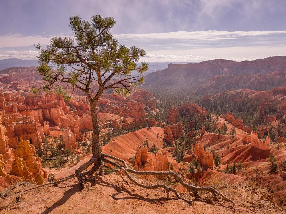 TENACIOUS Bryce Canyon (2018)