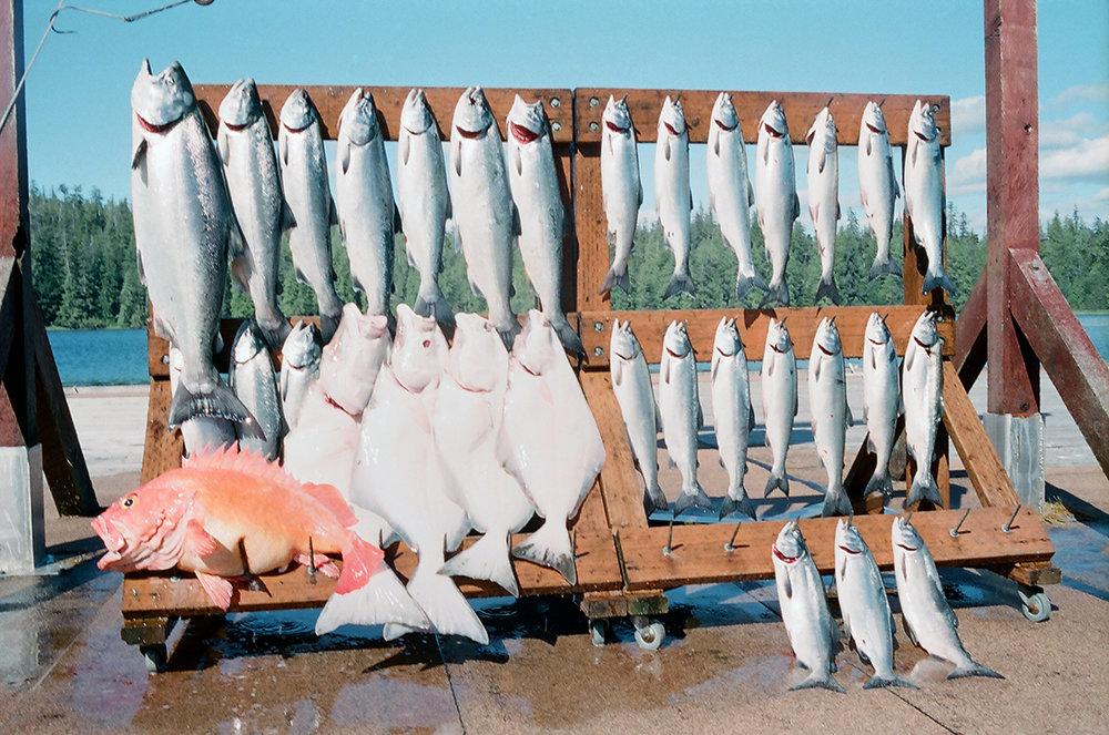 fishrackakweb.jpg