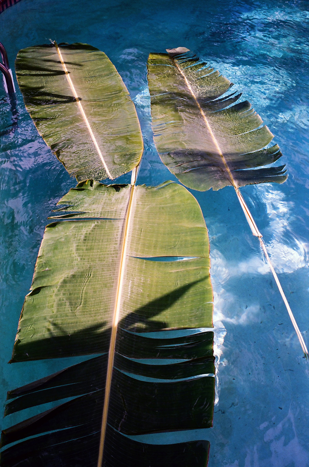 palmspoolweb.jpg