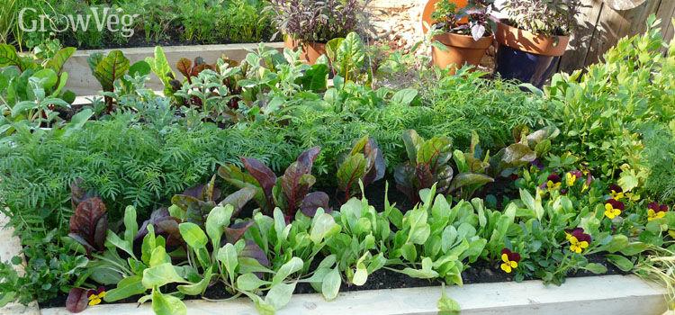 raised-beds-various-vegetables-2x.jpg