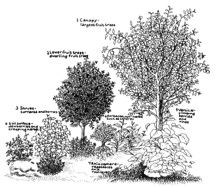 Fig.1.Hart-forest-garden1.jpg