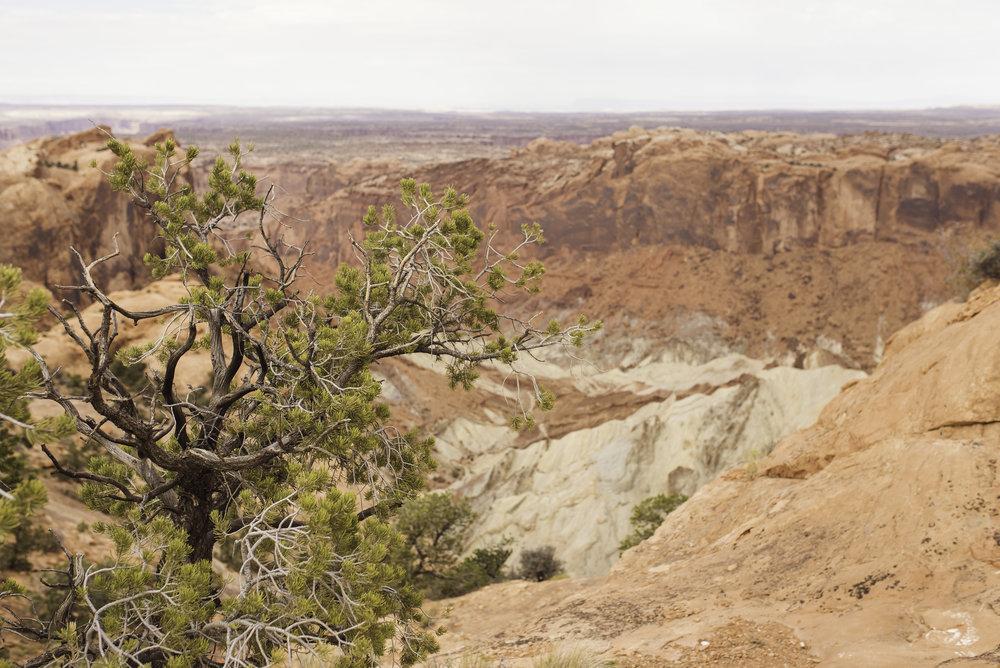 Moab, UT-1060.jpg