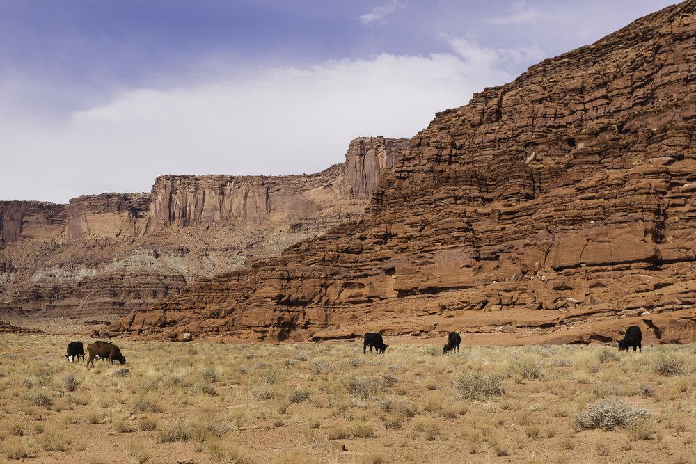 Moab, UT-1144.jpg