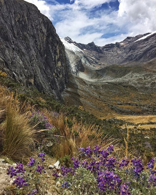 The hills are alive with all of these wildflowers! 😍😍😍 The Laguna 69 hike wasn't just about the destination at the end (the laguna, duh 🙄). The journey was just as beautiful. Definitely needed to remind myself of that as I was huffing and puffing throughout the 3+ hours to the top!